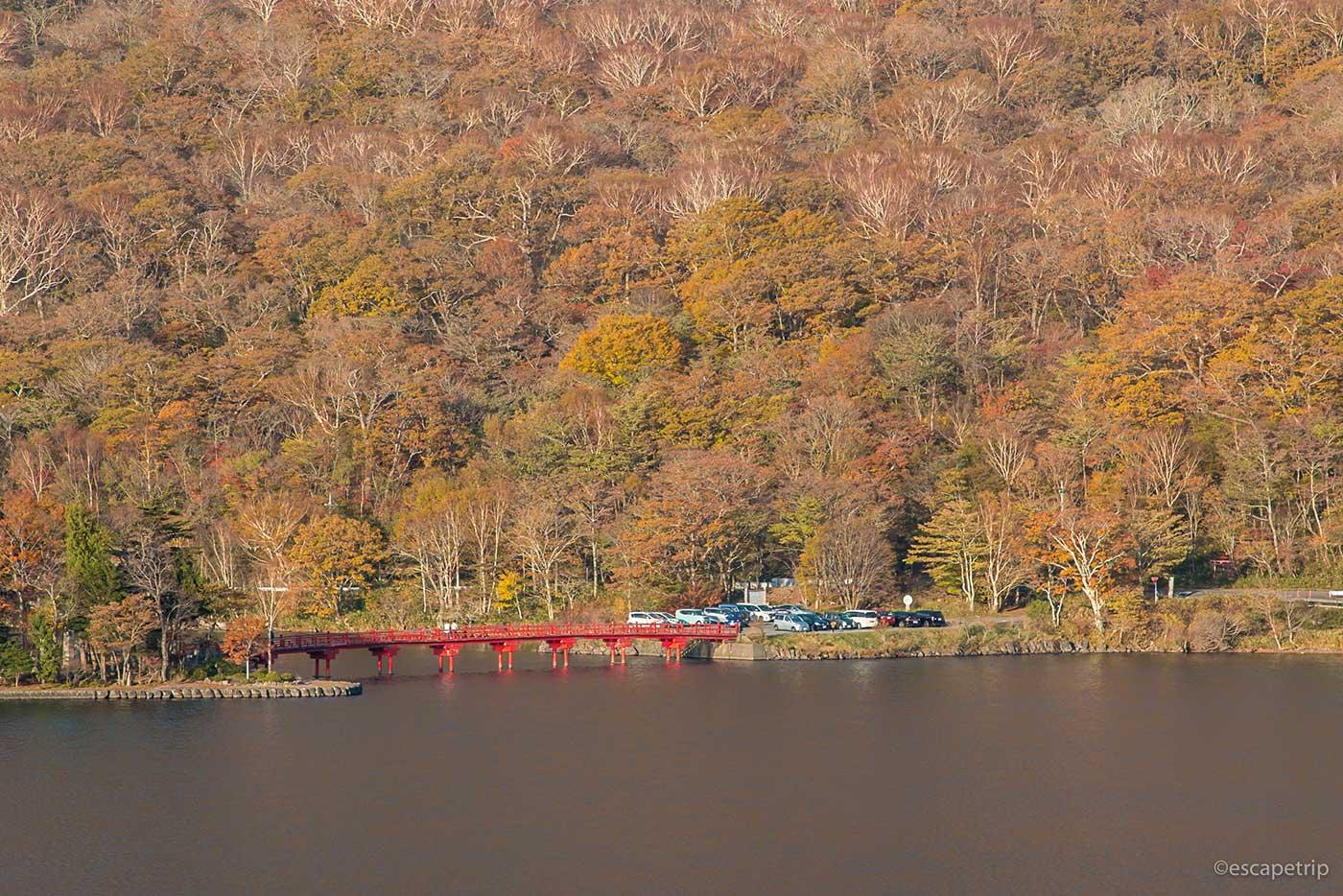 赤城神社の橋と紅葉