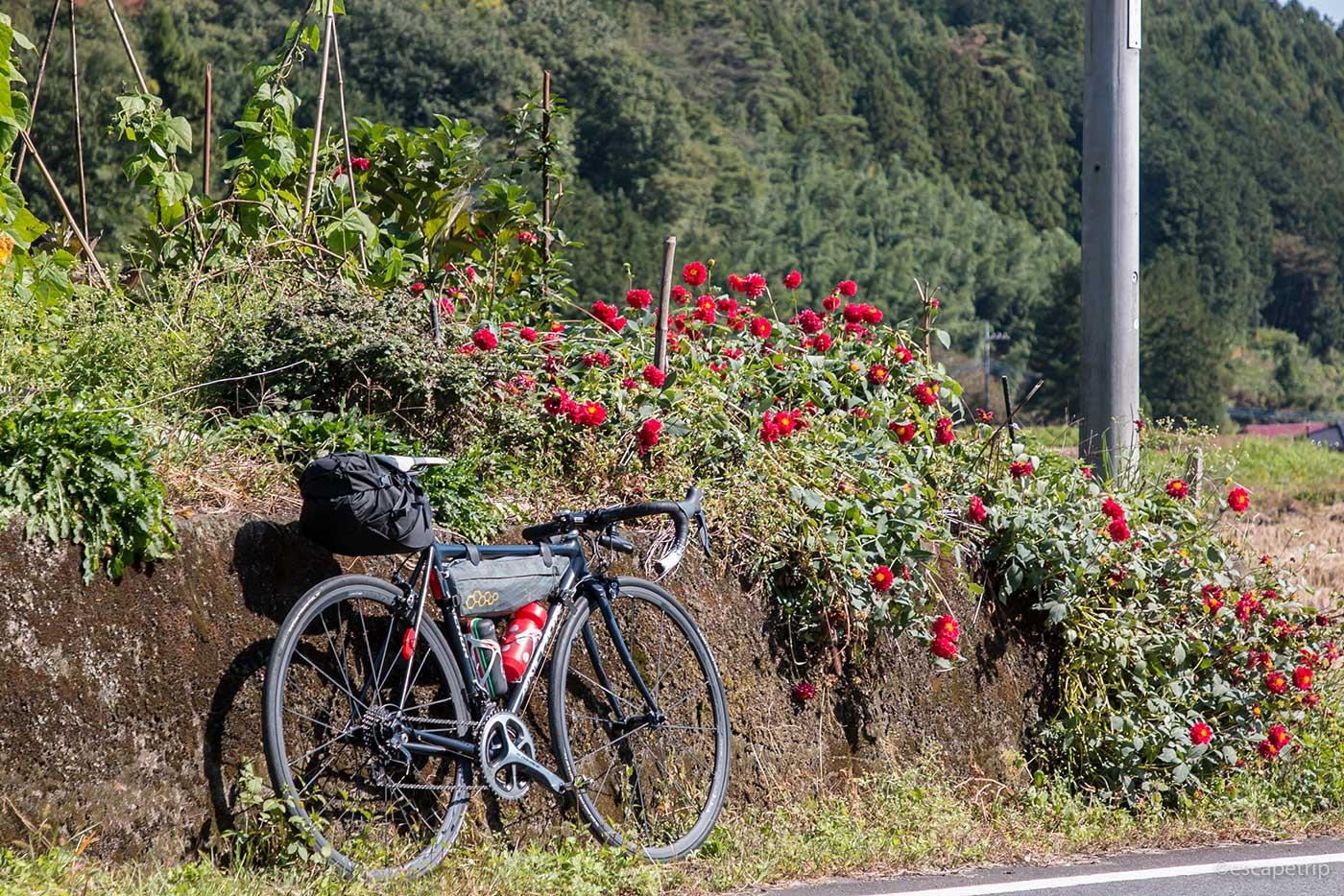 ロードバイクと赤い花