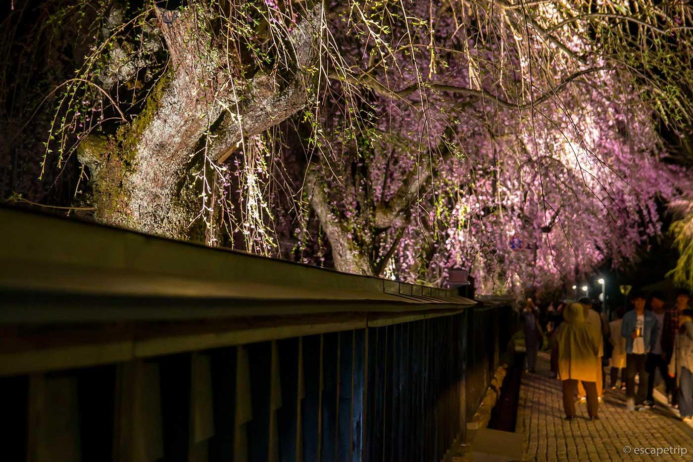 角館の夜桜