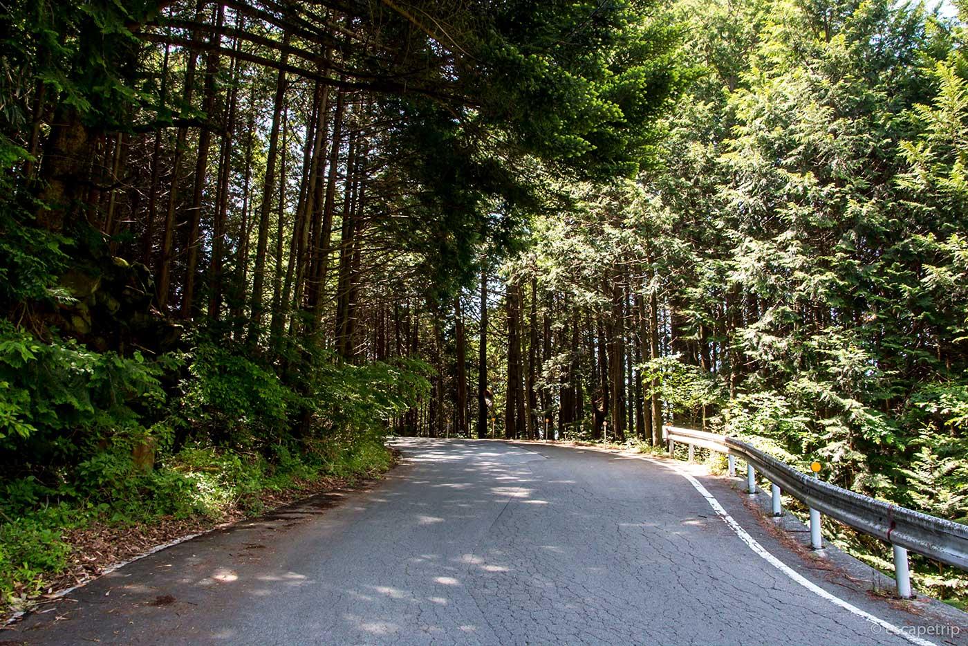 大弛峠の道