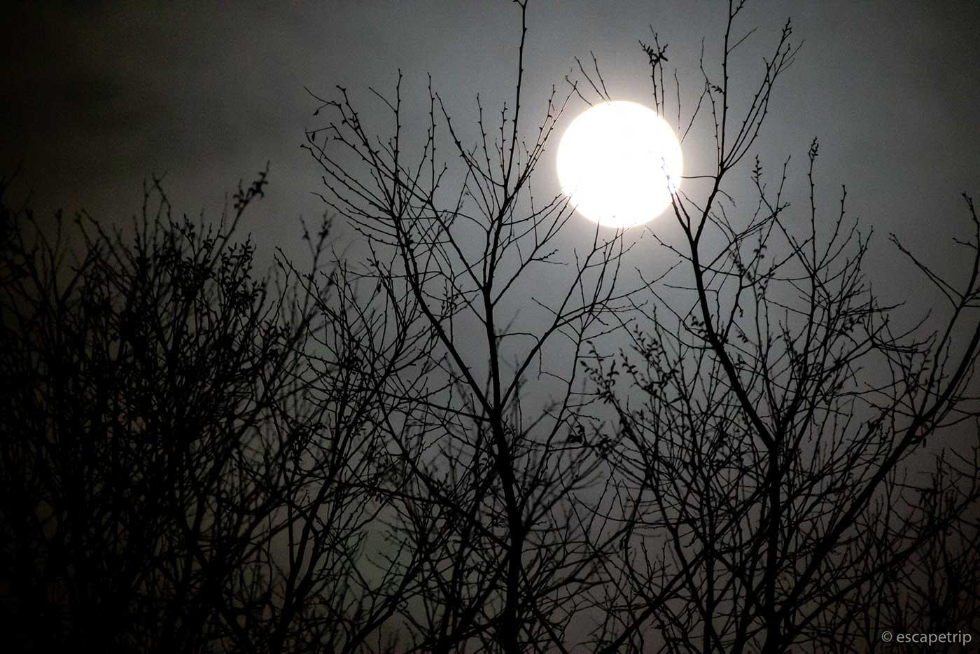 木々と満月