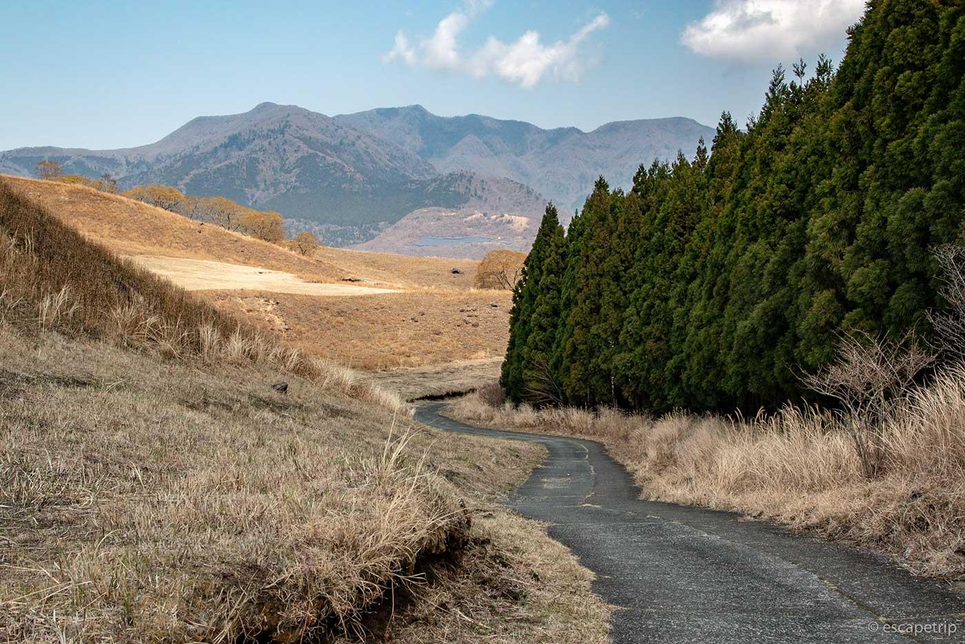 稲取細野高原の道