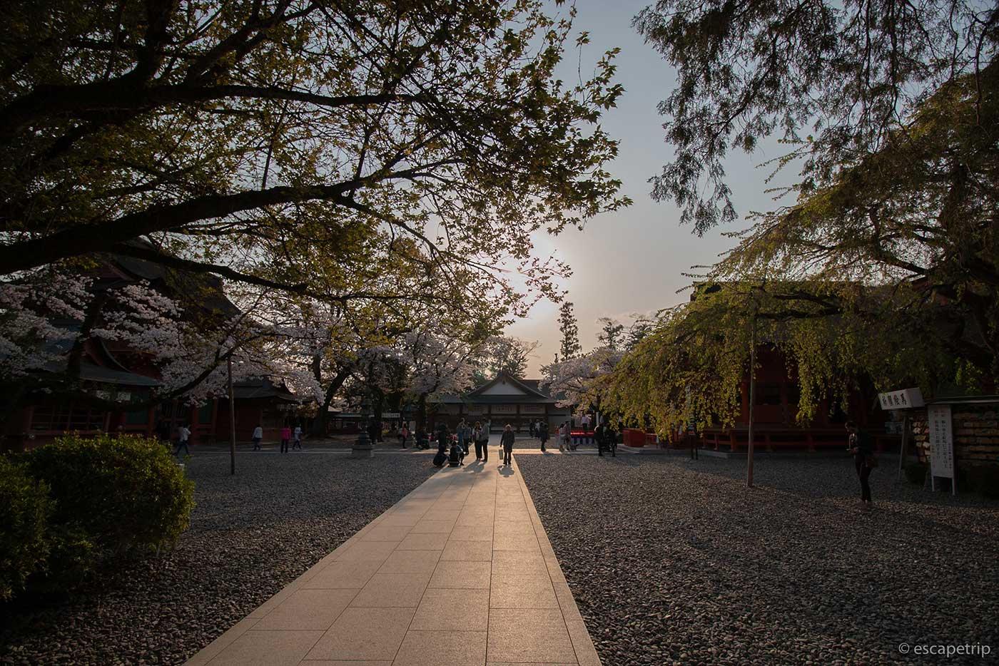 富士山本宮浅間大社の本殿のところ