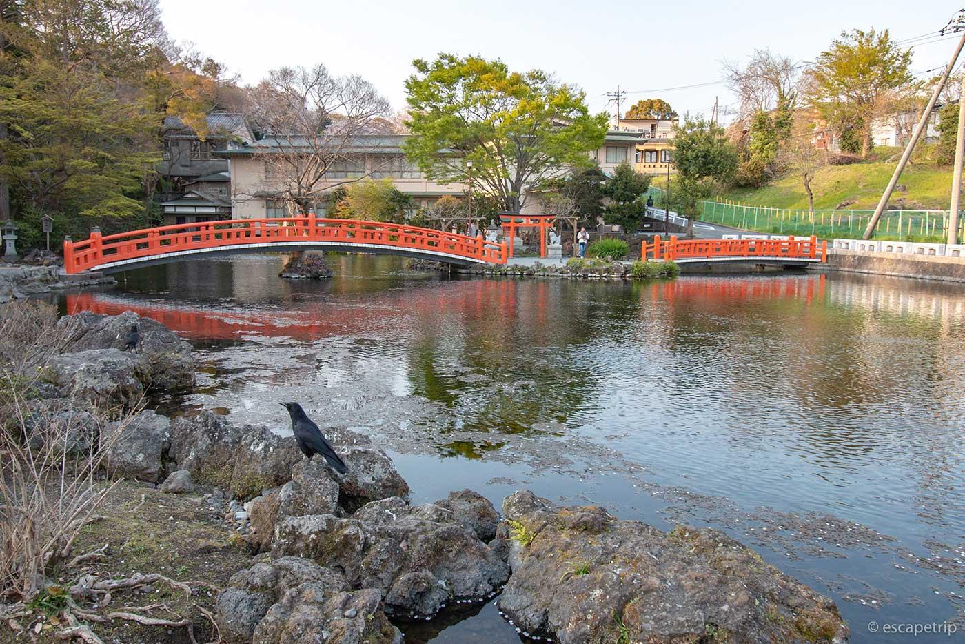 富士山本宮浅間大社の湧玉池