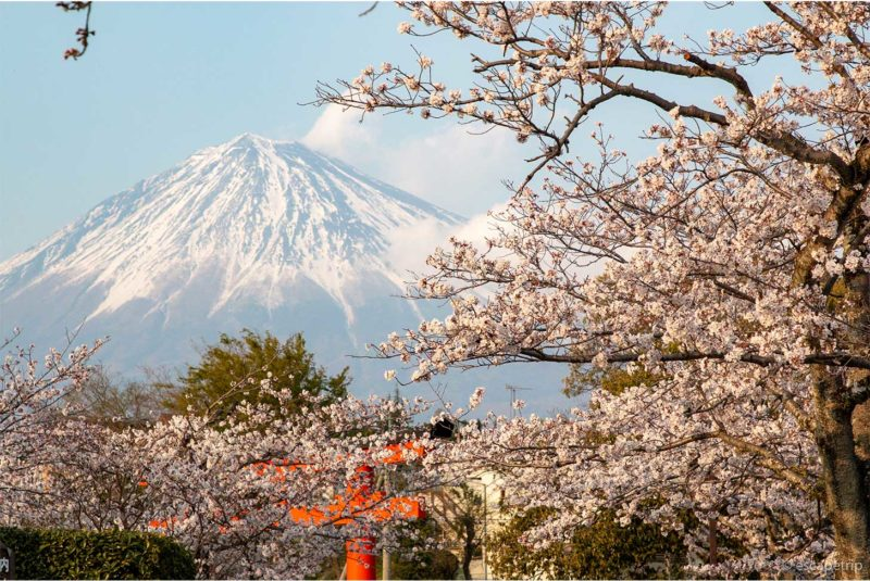 富士山と桜と神社