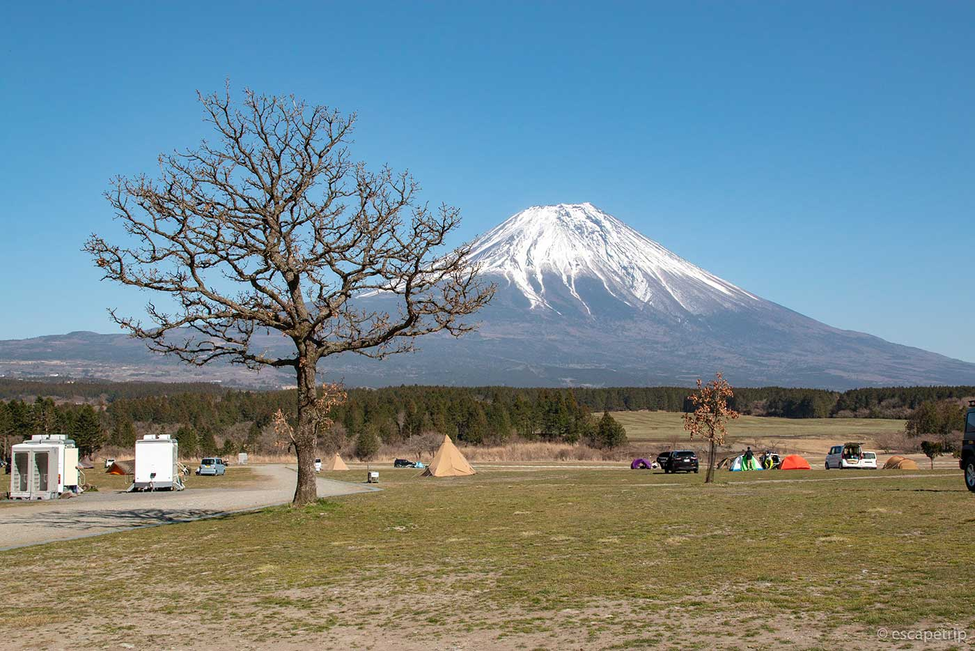 ふもとっぱらキャンプ場の富士山と枯れ木