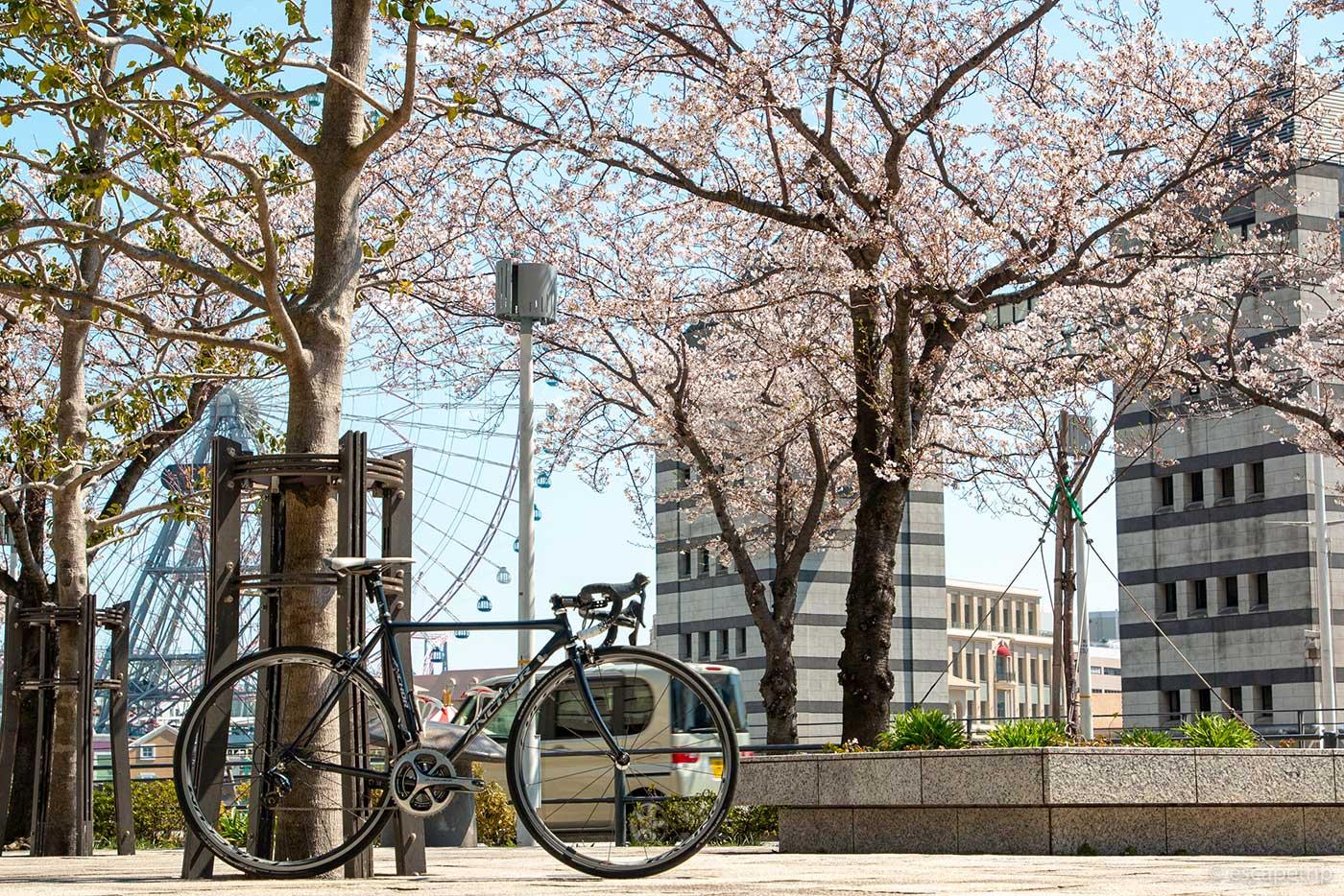 横浜みなとみらいの桜とロードバイク