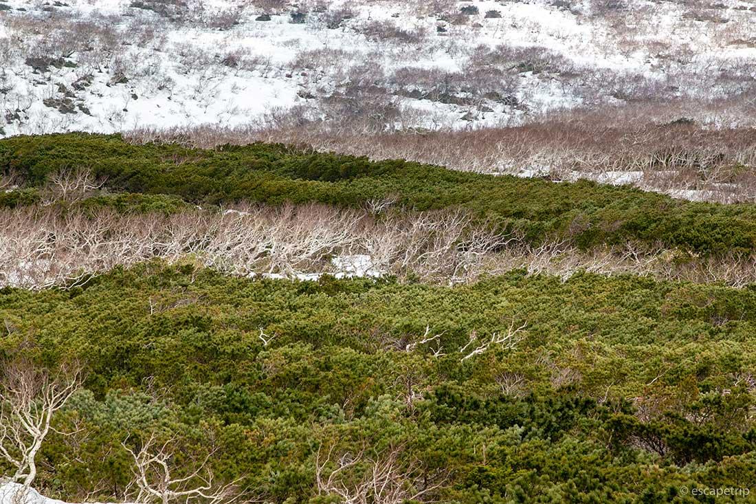 知床峠から見える景色