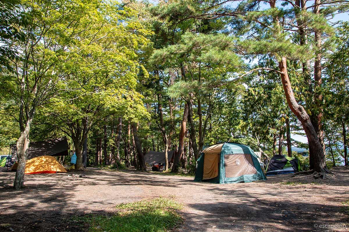 浩庵キャンプ場の林間サイト