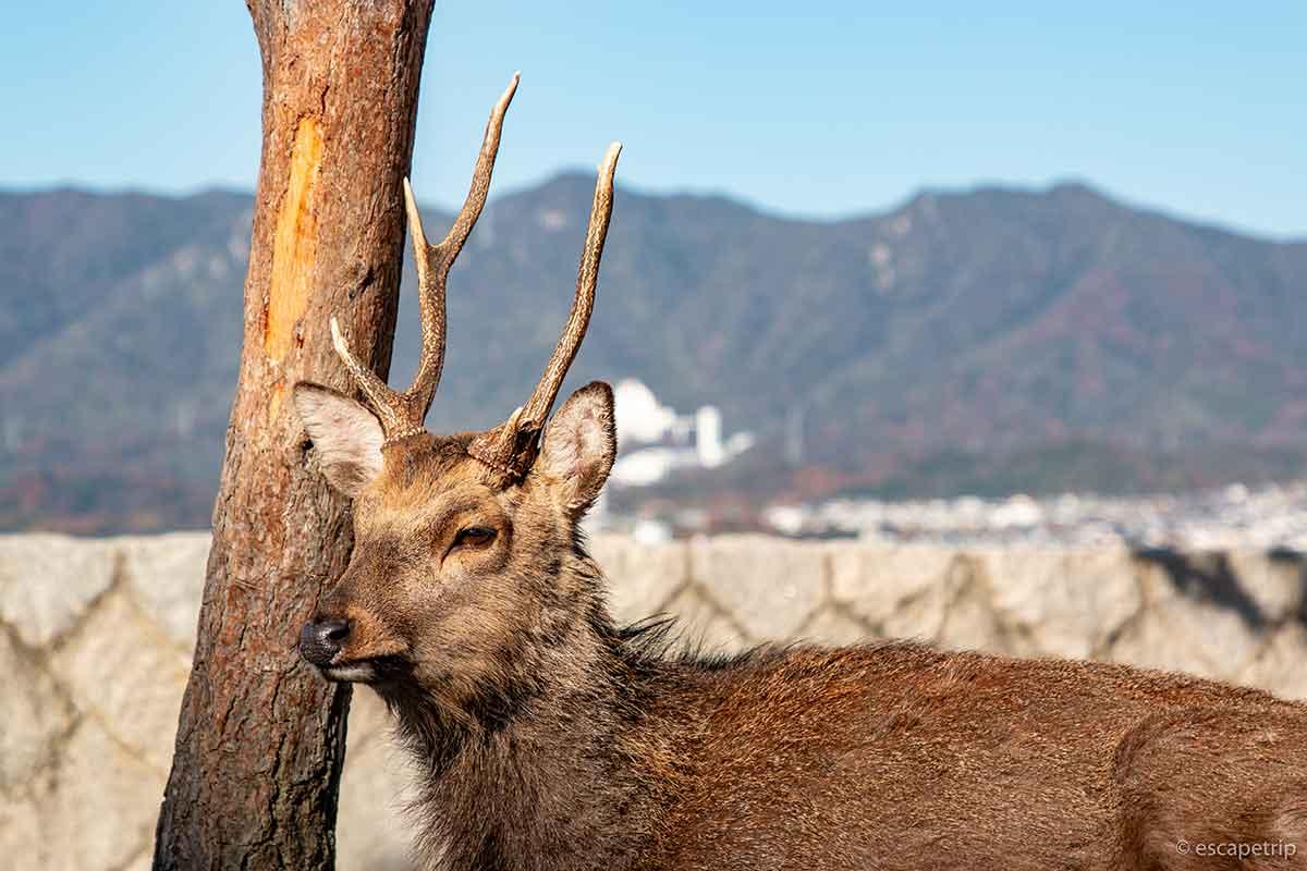 太陽に照らされる鹿