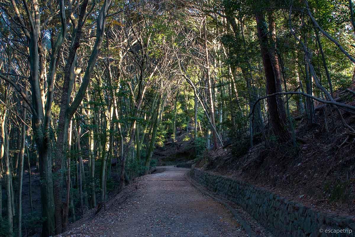 大吉山展望台の道中