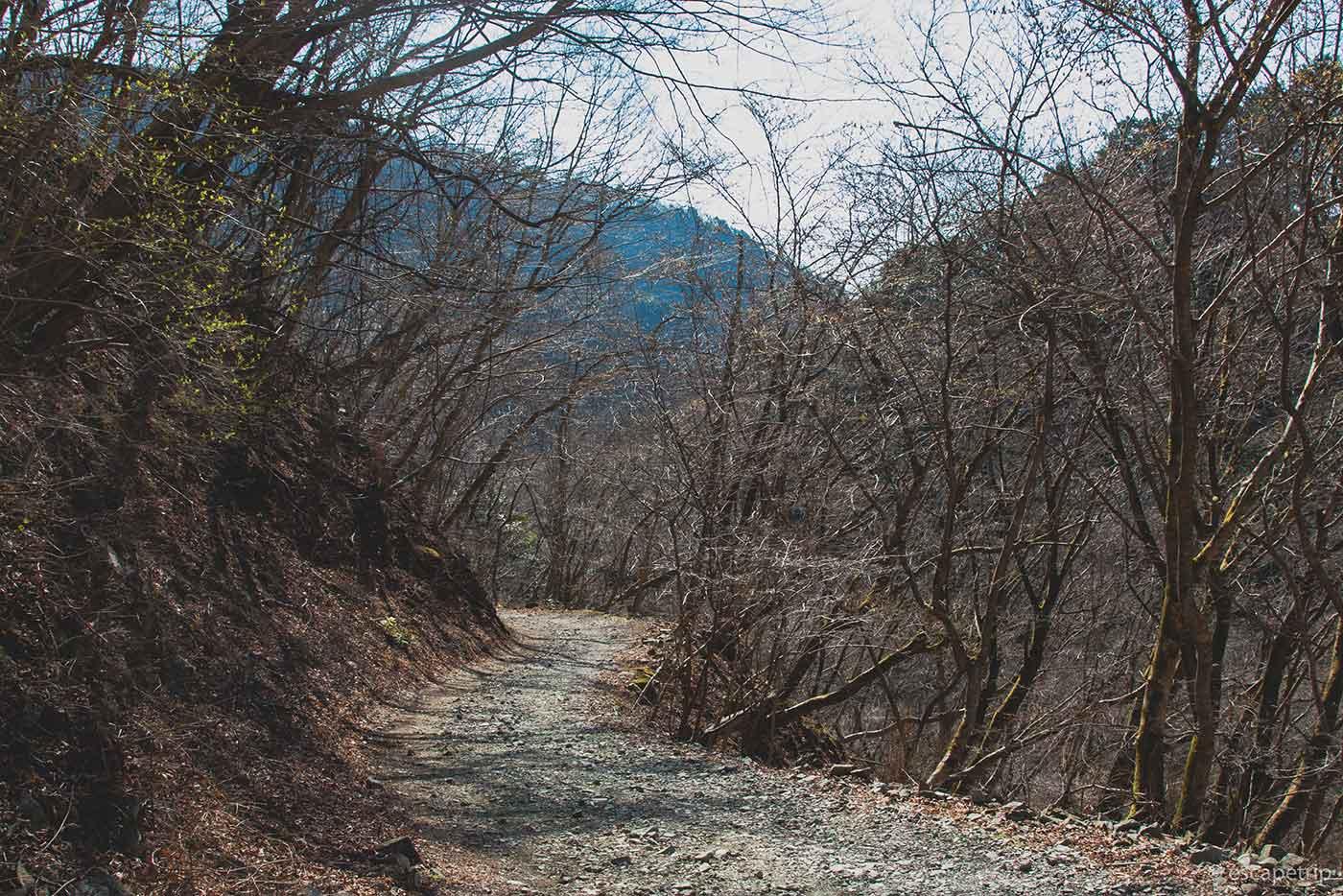 鍋割山の登山道