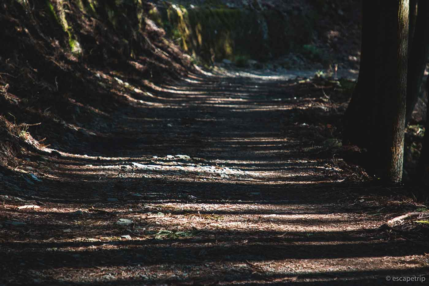 登山道の木漏れ日
