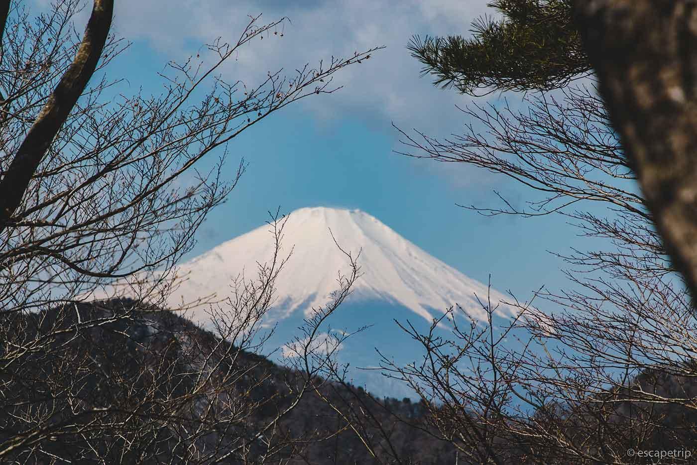 鍋割山の登山道から見える富士山
