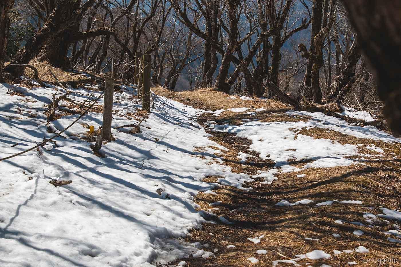 鍋割山の雪