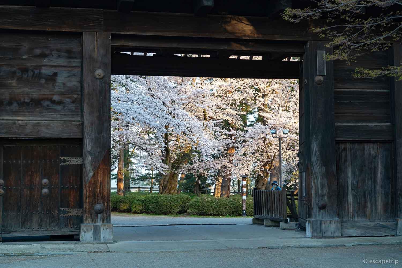 弘前公園の門から見える桜