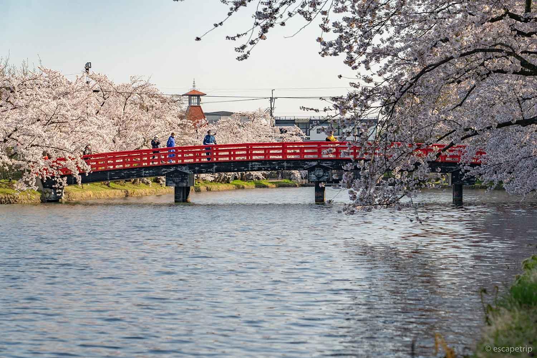 春陽橋と桜