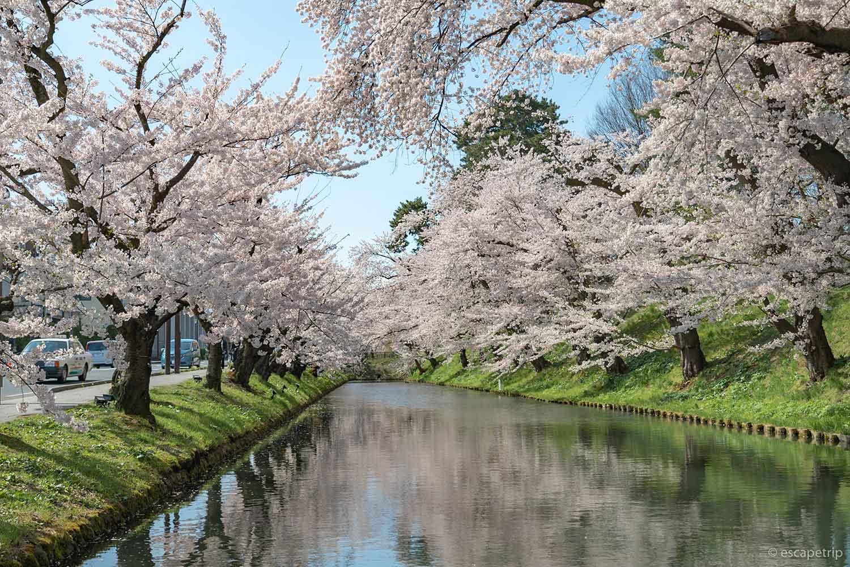 弘前公園の東の外濠と桜