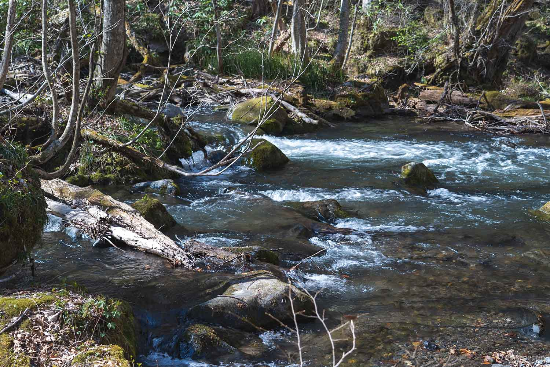 奥入瀬渓流の水の流れ